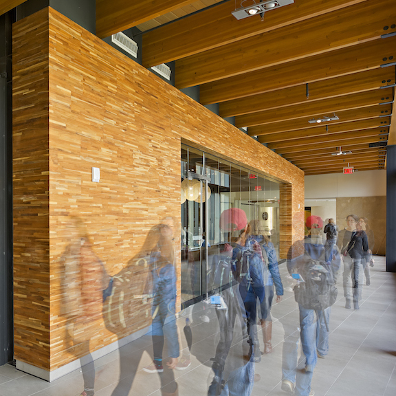 Reclaimed Teak Metro Paneling University of Michigan