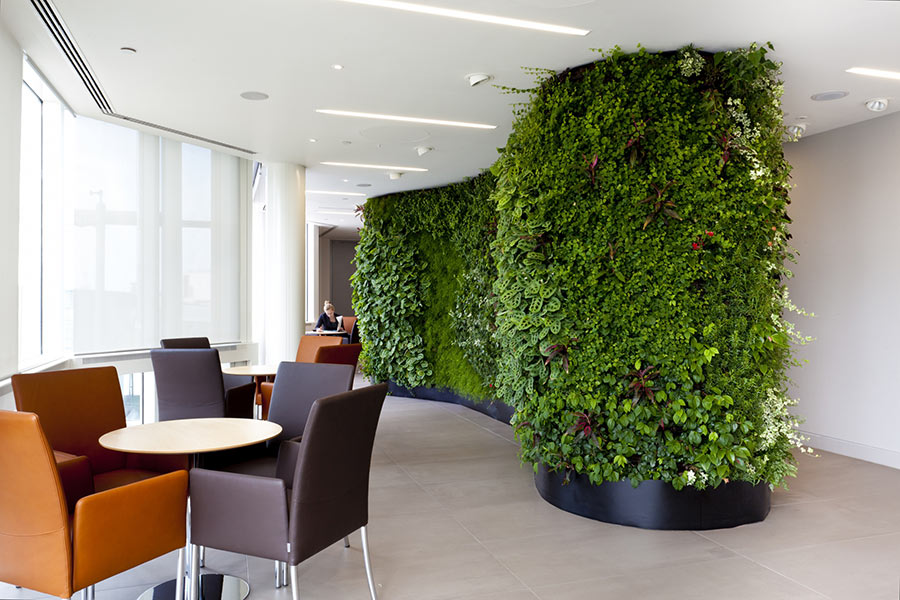 Green wall adds color and oxygen to office