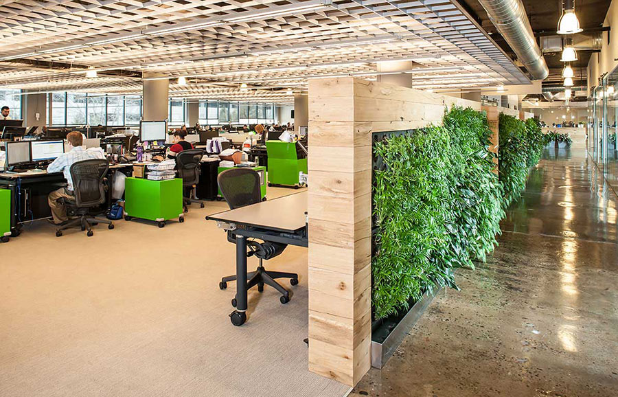Green living wall office