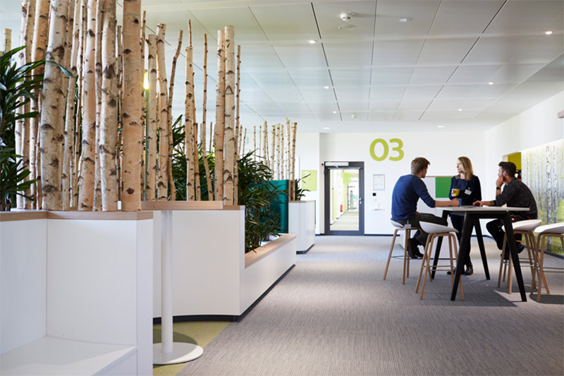 Example of biophilic office