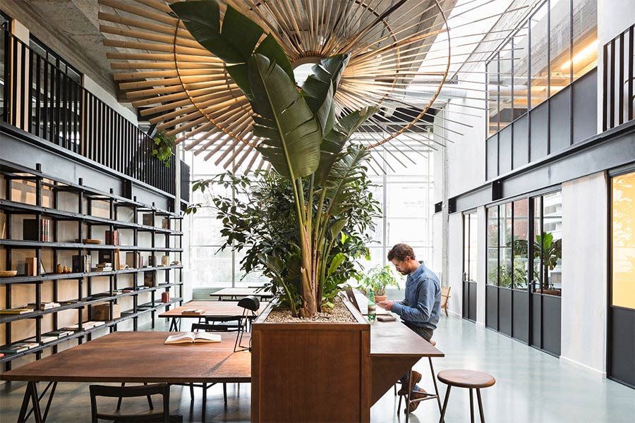 Fosbury & Sons uses plant life in minimalist workspace