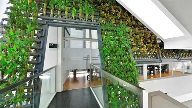 Modular design living wall