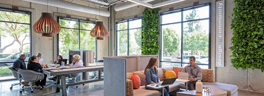 Pair of living walls add to small office