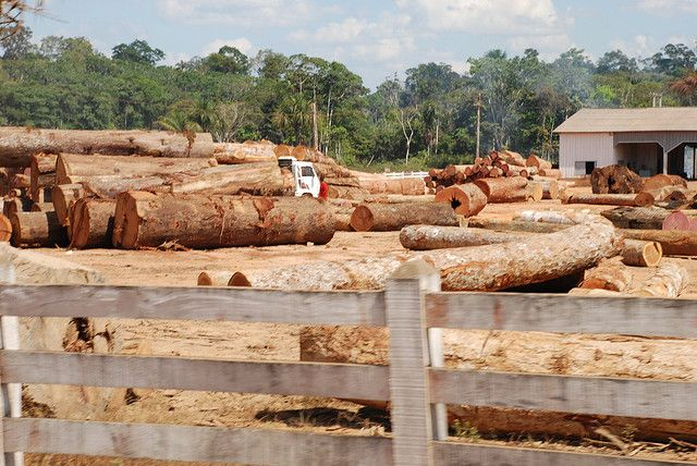 Illegal logging operation in Brazil