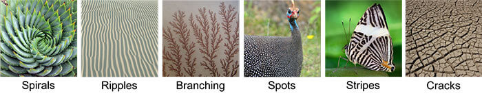 Examples of patterns found in nature