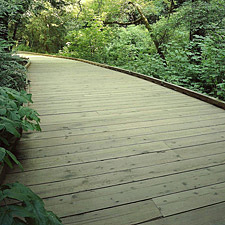 Reclaimed wood boardwalk at Muir Woods